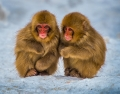 dany-chan-(canada)----twin-monkeys-playing.jpg