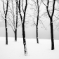 MARTIN RAK – Five Trees